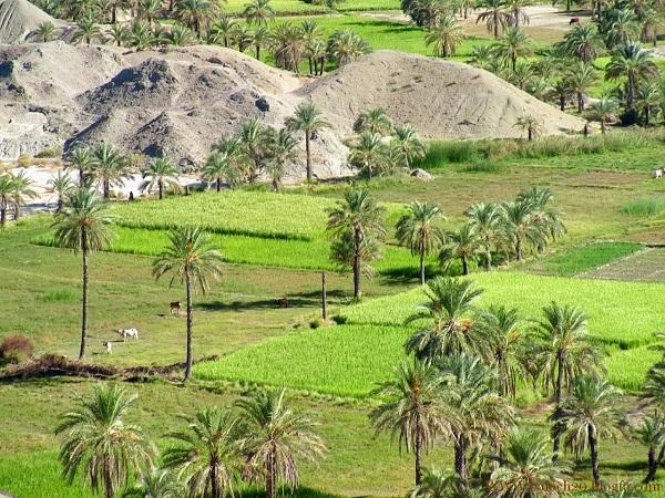 بلوچستان وطنم - IslamiDownload.ir - مراد اسکندری (1)