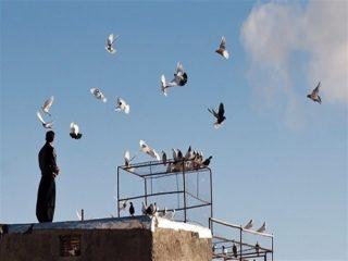 معضلی به نام «بیکاری» و «کبوتربازی»