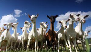 جانور اور اسلامی تعلیمات